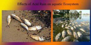 effects of acid rain on aquatic ecosystem