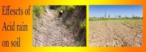 effects of acid rain on soil